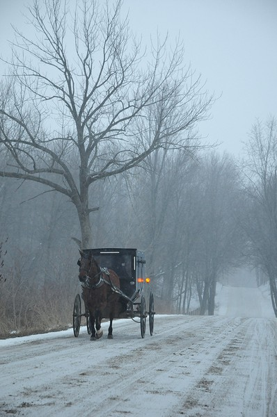 RT_amish_1090_72.jpg (Large)